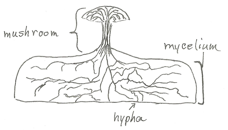 what makes a fungus a fungus