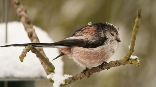 Cómo las aves se enfrentan con el frío en invierno | Audubon
