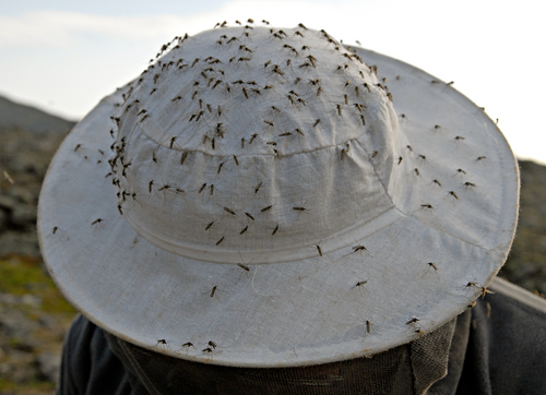 mosquitos on hat.jpg